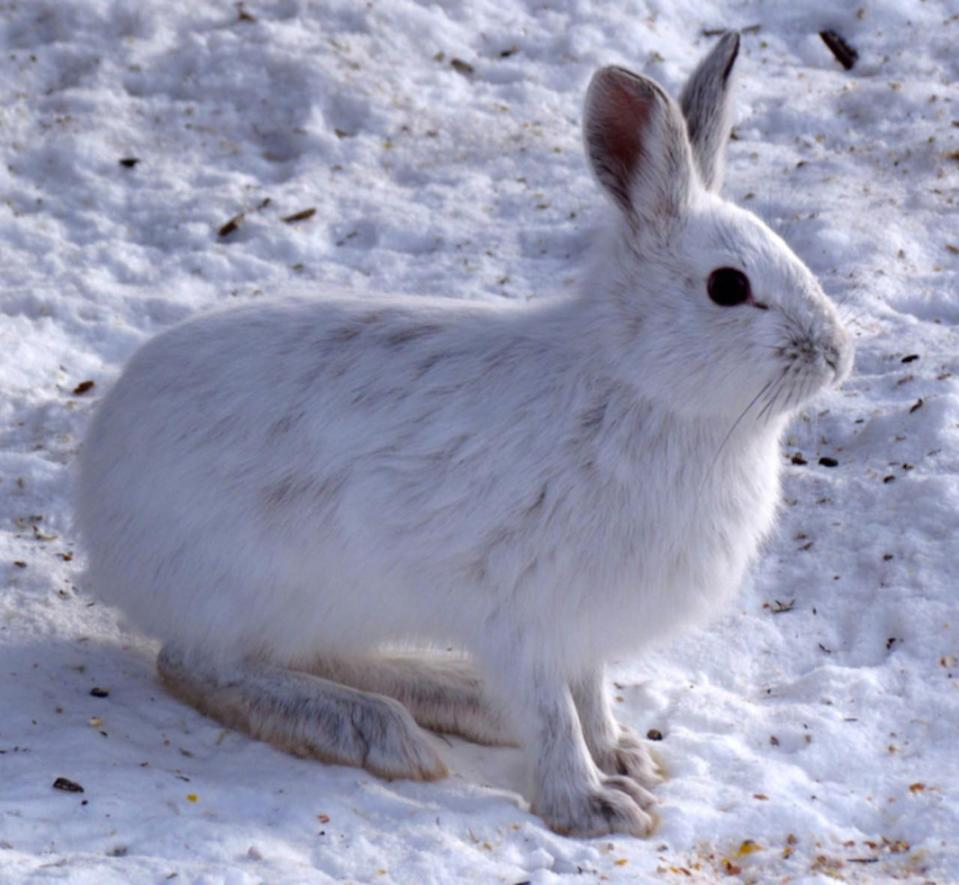 Four fascinating ways animals survive the winter