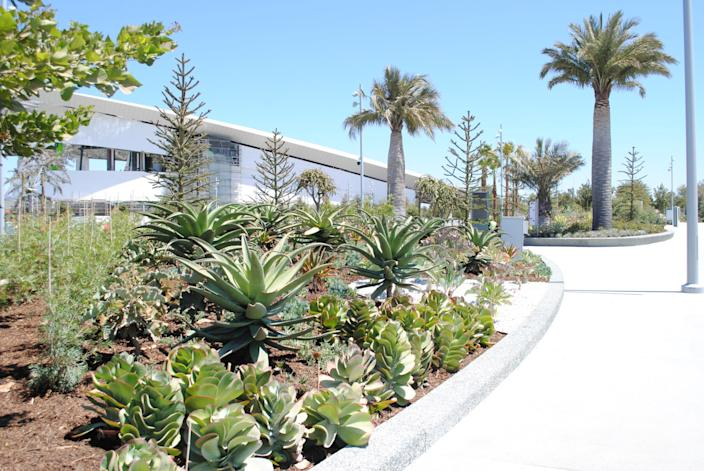 """For the SoFi Stadium landscape, Studio-MLA chose plants from the Mediterranean, the Cape of Africa and Chile. <span class=""""copyright"""">(Studio-MLA)</span>"""