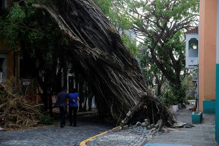 A couple walks by a damaged tree in the Hurricane Maria affected area of Old San Juan, Puerto Rico, October 12, 2017. REUTERS/Shannon Stapleton