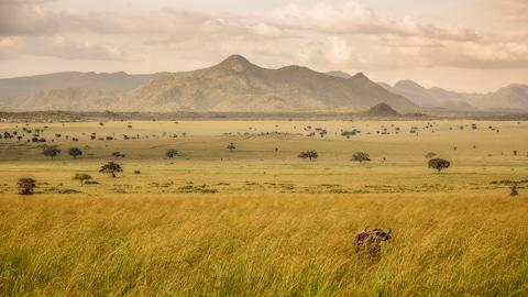 Kidepo Valley National Park - Credit: getty
