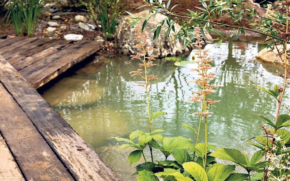 A river runs through it: a stream-bed features plants that can cope with flooding - Heathcliff O'Malley