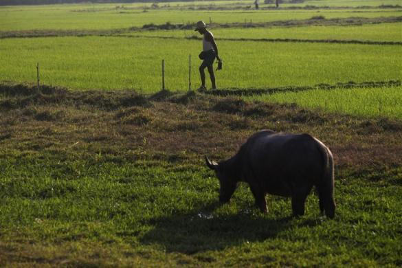 A farmer walks in a field near Phwartheinkha village in Kawhmu township, February 8, 2012.