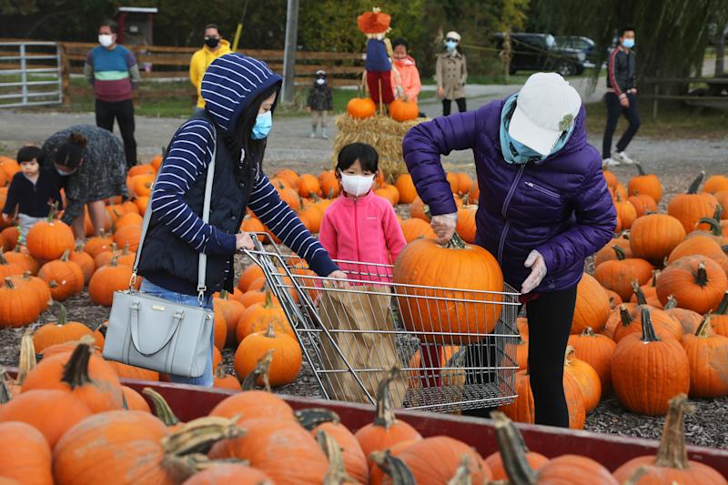People wearing face masks to protect them from the novel coronavirus (COVID-19) while selecting pumpkins for Thanksgiving and Halloween at a farm in Markham, Ontario, Canada, on October 03, 2020. Cases of COVID-19 continue to rise, with record daily numbers across the Greater Toronto Area. Calls to place the city of Toronto back into lockdown to slow the spread of the virus are mounting from healthcare officials. (Photo by Creative Touch Imaging Ltd./NurPhoto via Getty Images)