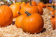 """<p><strong>Mount Sterling, Kentucky</strong></p><p>Along with the best pumpkins of the season, <a href=""""https://www.twosisterspumpkinpatch.com/"""" rel=""""nofollow noopener"""" target=""""_blank"""" data-ylk=""""slk:Two Sisters Pumpkin Patch"""" class=""""link rapid-noclick-resp"""">Two Sisters Pumpkin Patch</a> offers a corn maze, animal barn, hay tunnels, pumpkin painting and so much more! Admission is free for the corn maze, pumpkin barn and the animal barn, but there is a cost for some activities starting at $4 per person.<br><br>Check out their website for information about reopening in 2021.<br></p><p><em><em>*This photo is not from </em><em>Two Sisters Pumpkin Patch.</em></em></p><p><strong>RELATED: </strong><a href=""""https://www.goodhousekeeping.com/holidays/halloween-ideas/g2592/pumpkin-painting-ideas/"""" rel=""""nofollow noopener"""" target=""""_blank"""" data-ylk=""""slk:55 Easy Painted Pumpkins That'll Impress Everyone This Halloween"""" class=""""link rapid-noclick-resp"""">55 Easy Painted Pumpkins That'll Impress Everyone This Halloween</a></p>"""