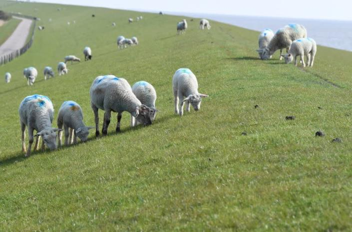 North Sea island farming family which forced Germany to tighten its climate law