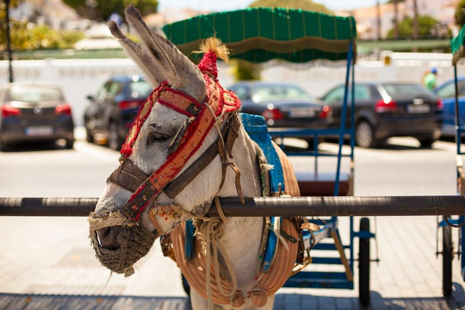 Donkey taxis are popular in Mijas Pueblo: Getty Images