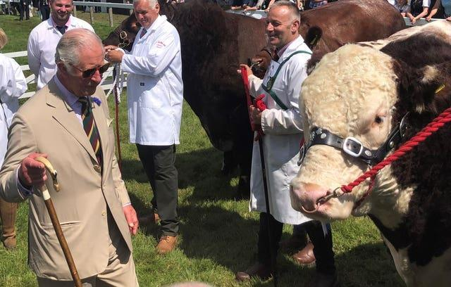The Prince of Wales meets 1,550kg champion Hereford Bull Moralee One Rebel Kicks during a visit to the Great Yorkshire Show
