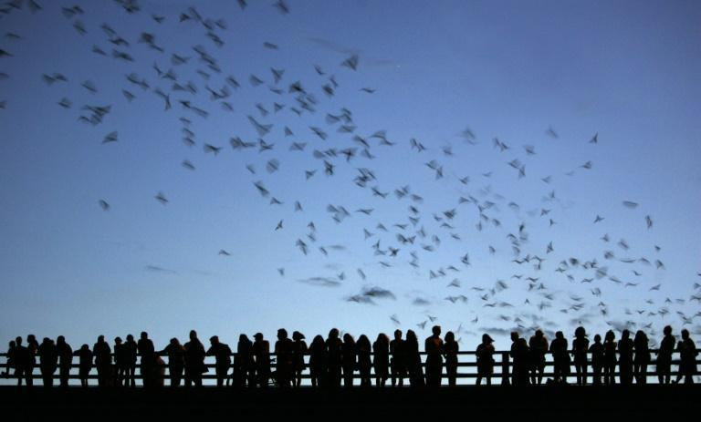 In the United States, thousands of Mexican free-tailed bats have been killed by hypothermia after being lured by milder winters into abandoning their habitual migration south