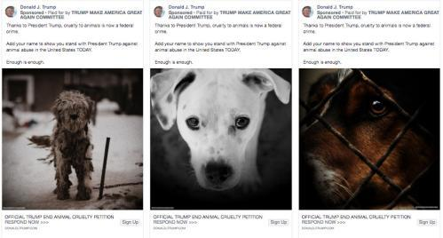 The Trump campaign ads about animal cruelty featured images of cute animals