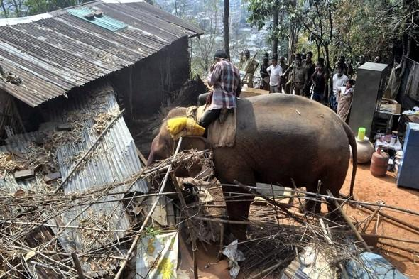 Animal rights groups blast using endangered elephants as 'bulldozers' in India