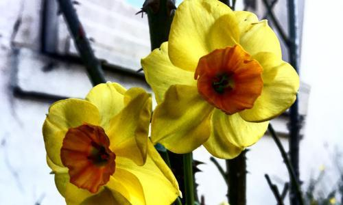 Mystery bulbs mean spring will be a bigger surprise