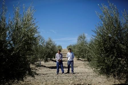 Olive pickers Pablo Casado, 53, and his son Sergio Casado, 24, poses for a portrait in an olive grove in Porcuna, southern Spain