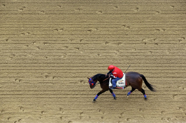 Social Inclusion, with exercise rider Domingo Navarro aboard, walks on the track at Pimlico Race Course in Baltimore, Wednesday, May 14, 2014. The Preakness Stakes horse race is scheduled to take place May 17. (AP Photo)