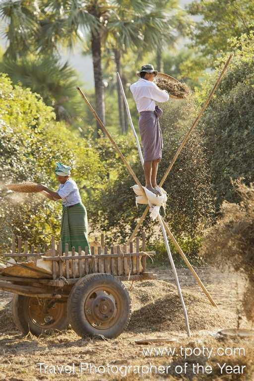 Groundnut harvest near Bagan, Burma <br><br>Philip Lee Harvey, UK<br><br>Camera: Canon EOS 5D Mk2	 <br><br>Winner, People Watching portfolio