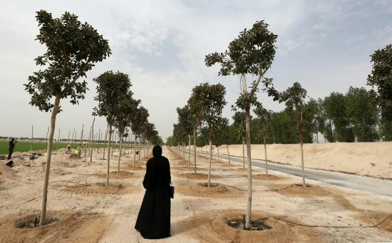 A woman looks at trees at a new nursery outside Doha in Qatar on February 22, 2018 with the desert nation planning to plant 16,000 trees around 2022 World Cup venues