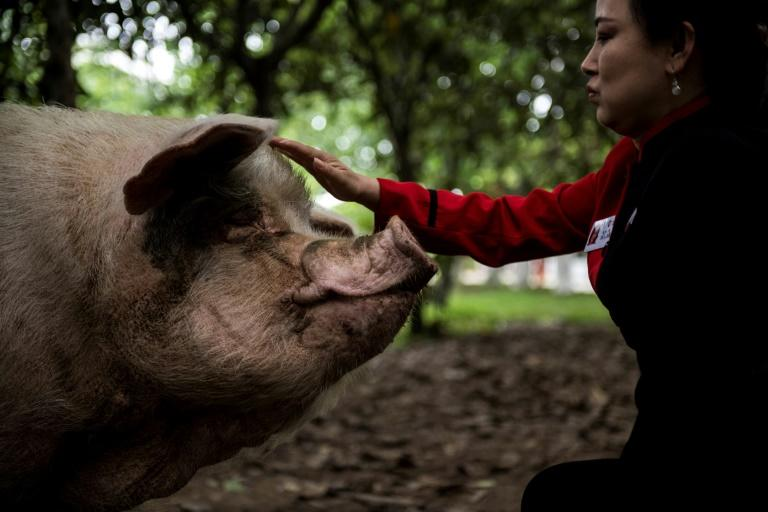 'Zhu Jianqiang' or 'Strong Pig' became a national icon after surviving more than a month under the quake rubble