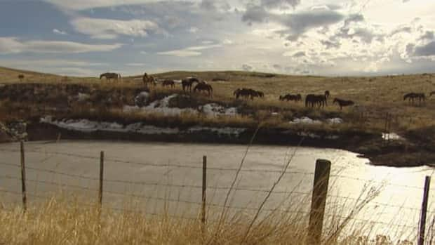 The Douglas Lake Cattle Company has won a years-old fight to restrict access to local anglers to two pristine trout lakes on its property. ( - image credit)