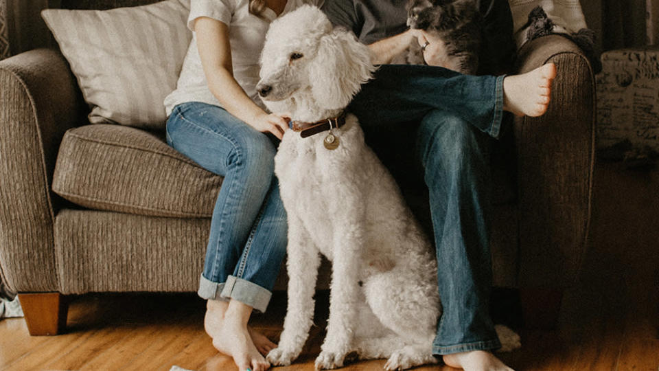 You can often add a wellness plan to pet insurance, and this portion won't have a waiting period. - Credit: Sarandy Westfall/Unsplash