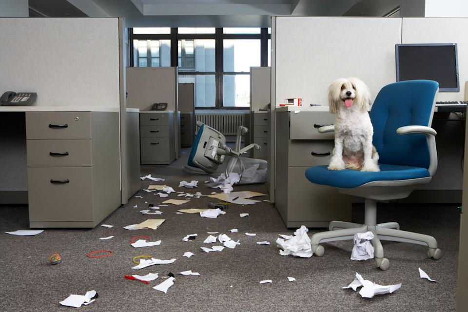 Dog on chair, messy office