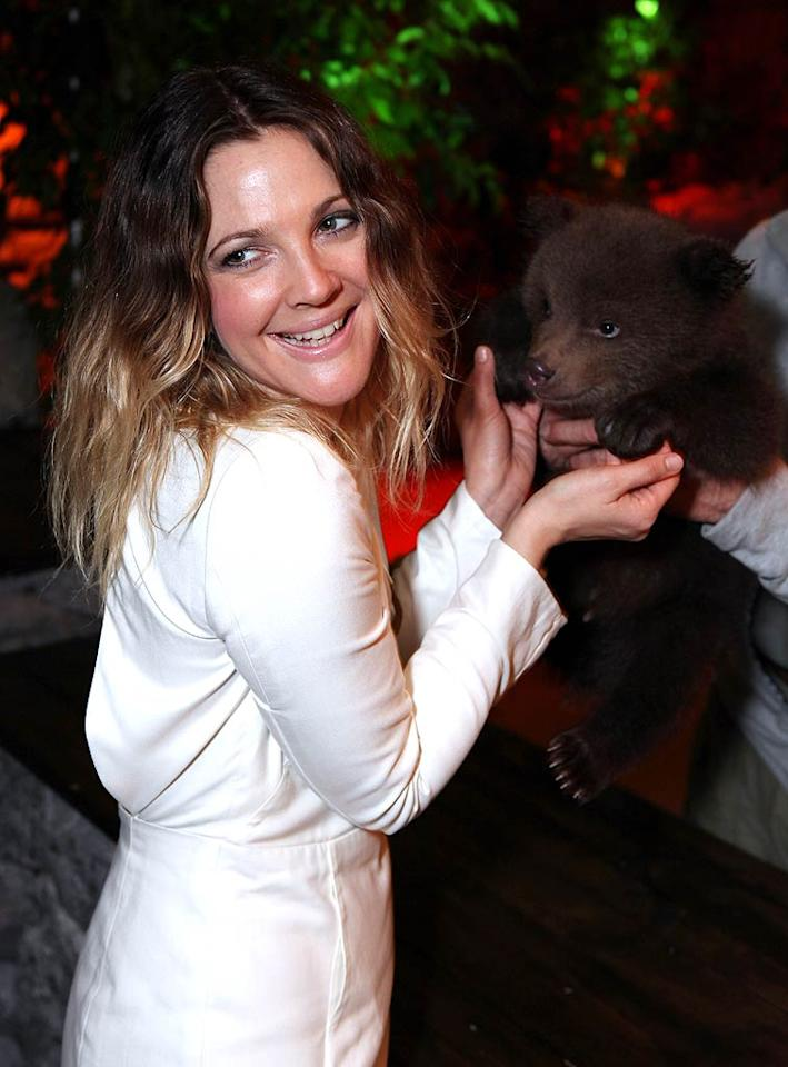 "Drew also found time to make a new friend at CinemaCon -- an adorable baby bear who is part of Sony's promotional campaign for the upcoming Kevin James comedy ""Zookeeper."" <i>The Hollywood Reporter</i> reports that the little brown ball of fluff peed all over Sony's worldwide distribution president Rory Bruer when he brought him on stage. Oops! Ryan Miller/<a href=""http://www.gettyimages.com/"" target=""new"">GettyImages.com</a> - March 30, 2011"