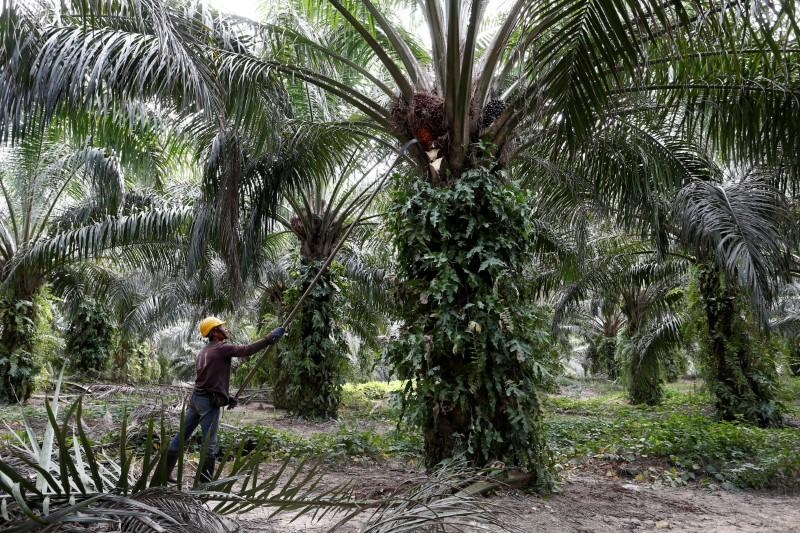 Malaysia open to Davos talks with India amid palm oil spat