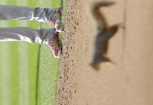 Brian Dozier of the Twins watches as a squirrel runs on the field during Saturday's game in Cleveland. (AP)