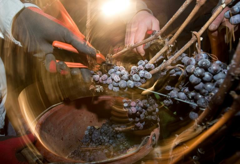 Put on ice: There will be no 2019 vintage of Germany's ice wine, as a mild winter failed to produce the cold temperatures needed