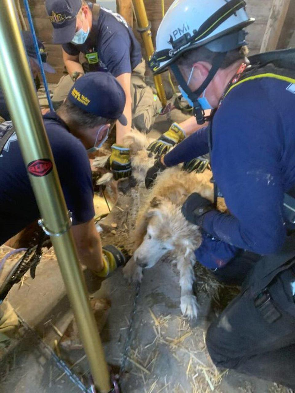 Firefighters from station 62 in Aloha paired up with firefighters from our technical rescue team from station 51 in Tigard to rescue a 12 yo Golden Retriever that had fallen into an abounded well in Aloha this afternoon.