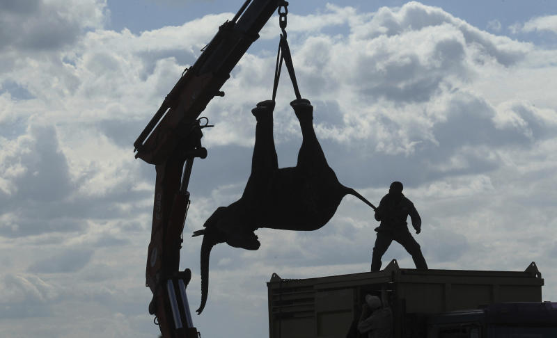 FILE - In this Tuesday July 12, 2016 file photo, an elephant is lifted by a crane in an upside down position in Lilongwe, Malawi, in the first step of an assisted migration of 500 of the threatened species. African Parks, which manages three Malawian reserves is moving the 500 elephants from Liwonde National Park, this month and next, and again next year when vehicles can maneuver on the rugged terrain during Southern Africa's dry winter. (AP Photo/Tsvangirayi Mukwazhi)