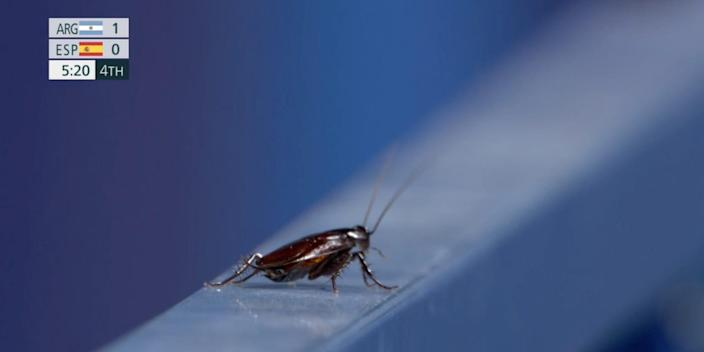 A cockroach is shown during an 2020 Tokyo Olympic broadcast