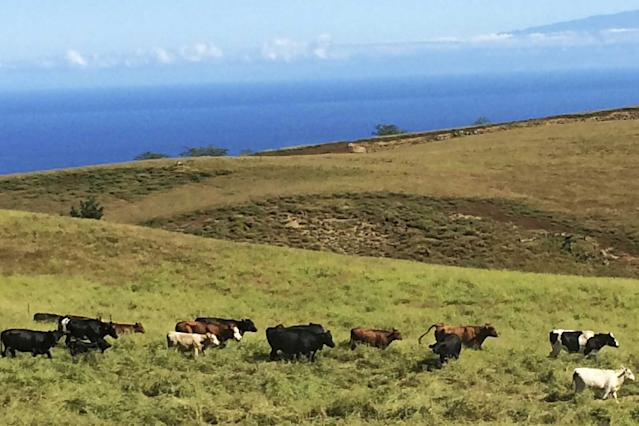 These Native Hawaiians Keep Traditions Alive On Their Ranch Puuanahulu-DEEDEE-KEAKEALANI-BERTELMANNReminisce