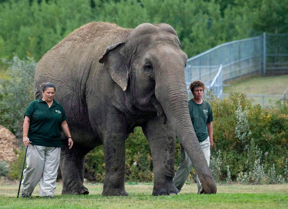 Lucy the elephant with her handlers, circa 2009. A Supreme Court dismissed a case about her treatment in 2019. (Photo: Canadian Press)