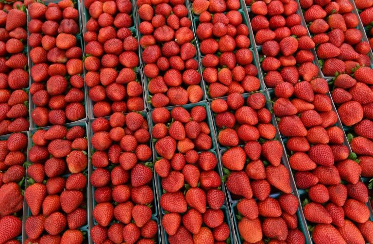 Australians told to chop strawberries as police investigate needles found in fruit
