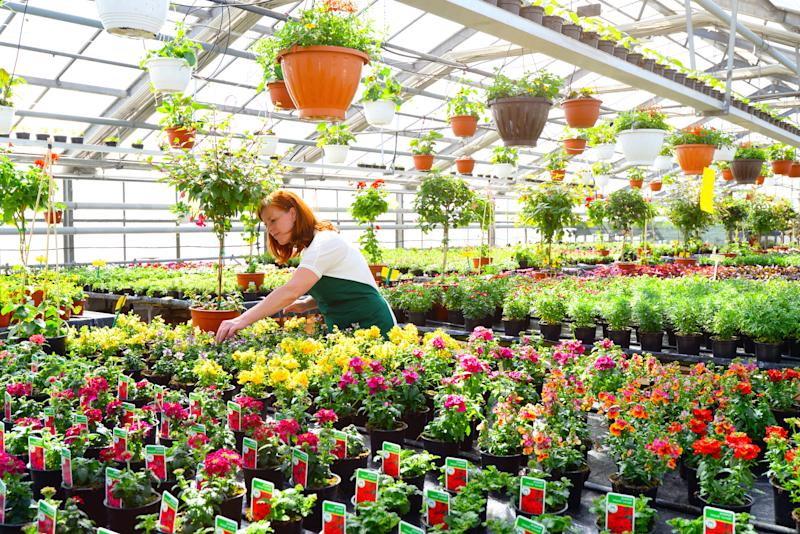 Woman working in a greenhouse, a setting in which Berry's films are often used.