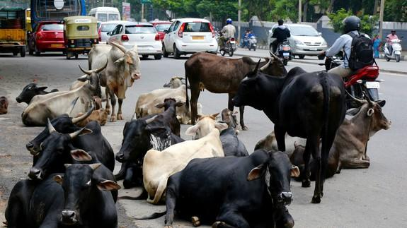 This education minister believes cows exhale oxygen