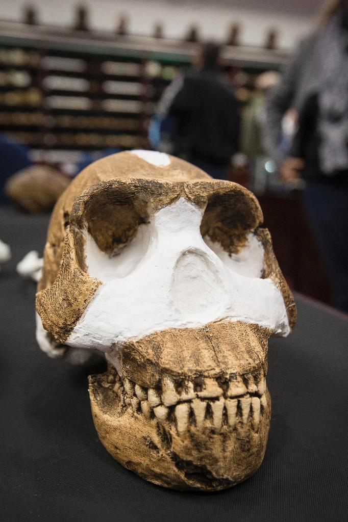 The skull of the Homo Naledi on display at the University of the Witwatersrand in Johannesburg, South Africa (AFP Photo/Brett Eloff)