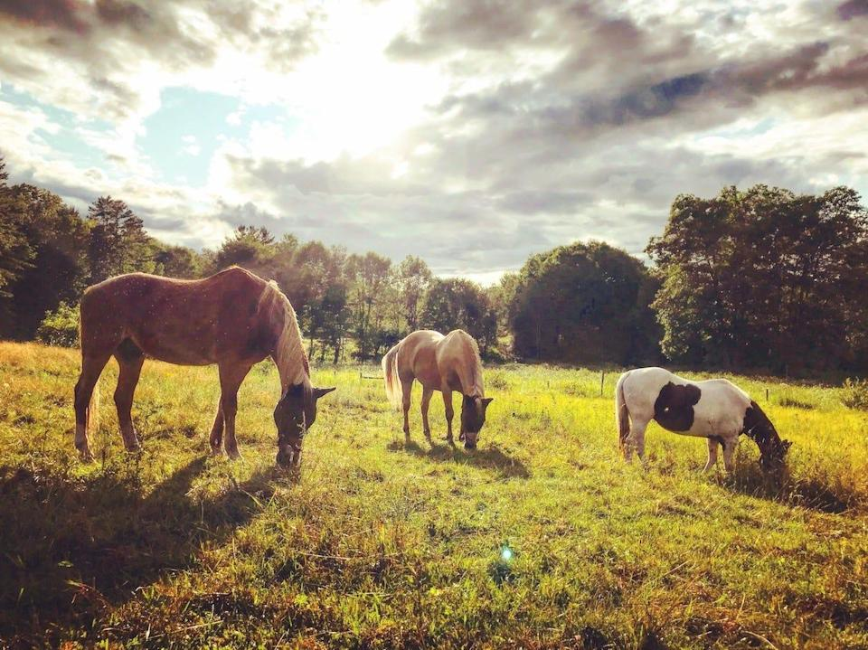 Horses at sunset on Michael Shank's southern Vermont farm and animal sanctuary.