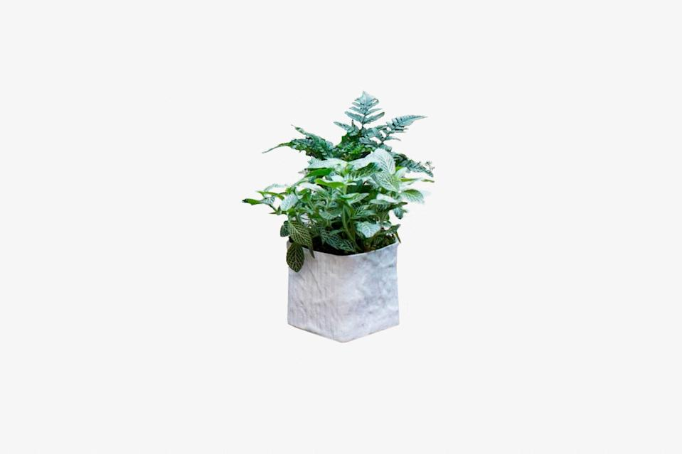 """If your mom is missing the plants and lush mangrove forests spotted on previous vacations, why not bring nature to them? Plantshed is offering a curated mystery bundle of three medium-sized plants that will brighten up any home. Each bundle is hand-selected to suit your lighting needs (you can choose from different options on the site), and you get to pick what kind of pots you'd like to grow them in. Plus, they each come with plant care instructions—perfect for those who may not have a green thumb. $52, Plantshed. <a href=""""https://www.plantshed.com/instant-jungle-bundle-medio"""" rel=""""nofollow noopener"""" target=""""_blank"""" data-ylk=""""slk:Get it now!"""" class=""""link rapid-noclick-resp"""">Get it now!</a>"""