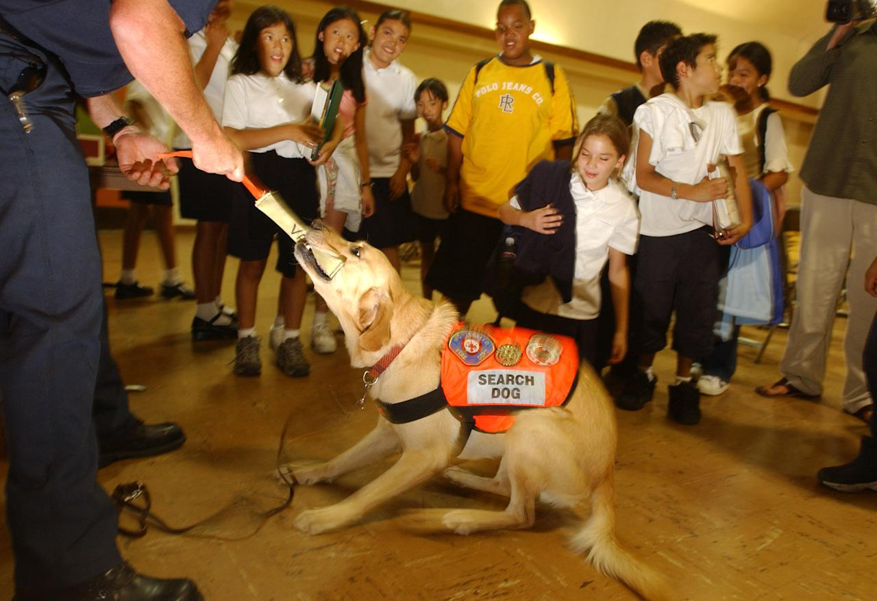 Students watch as firefighter Marc Valentine plays tug-of-war with his dog, Val, a search dog trained by the National Disaster Search Dog Foundation and deployed to seek survivors in the September 11, 2001 World Trade Center terror attack, during a demonstration at San Rafael Elementary School on September 10, 2002 in Pasadena, California. One third of the dogs trained by the NDSDF worked at 'Ground Zero' in New York city. (Photo by David McNew/Getty Images)