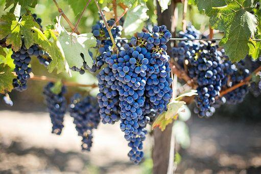 Image from askanews web site