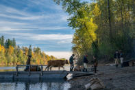 """This image released by A24 Films shows a scene from """"First Cow."""" (Allyson Riggs/A24 Films via AP)"""