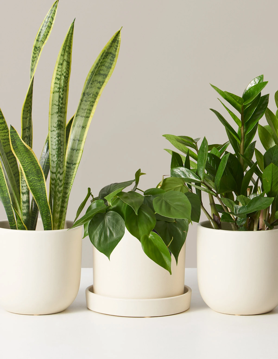 """<h3><h2>Monthly Plant Subscription</h2></h3><br><strong>Why She'll Love It</strong><br>If your mom has a major green thumb (or budding plant passion), then enrolling her in this reader-popular plant subscription is approved gifting gold.<br><br><strong>Care</strong><br>This recurring service delivers one new easy-care plant and ceramic planter, per month.<br><br><em>Shop</em><strong><em> <a href=""""https://www.thesill.com/products/beginner-potted-plants-monthly-subscription-box"""" rel=""""nofollow noopener"""" target=""""_blank"""" data-ylk=""""slk:The Sill"""" class=""""link rapid-noclick-resp"""">The Sill</a></em></strong><br><br><strong>The Sill</strong> Classic Plant Subscription, $, available at <a href=""""https://go.skimresources.com/?id=30283X879131&url=https%3A%2F%2Fwww.thesill.com%2Fproducts%2Fclassic-subscription-box"""" rel=""""nofollow noopener"""" target=""""_blank"""" data-ylk=""""slk:The Sill"""" class=""""link rapid-noclick-resp"""">The Sill</a>"""