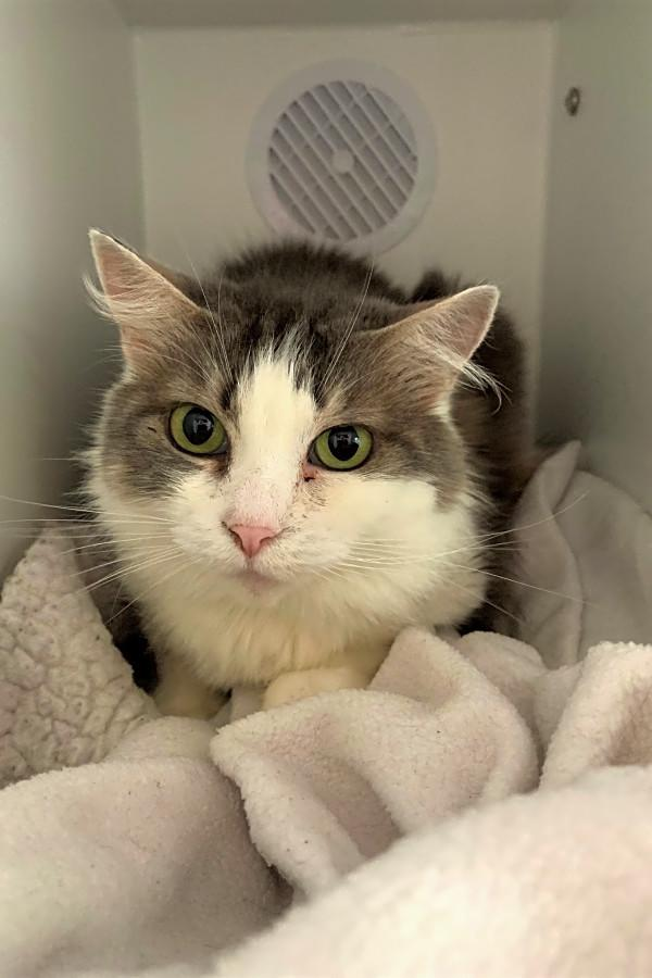 Seattle Based Cats Are Up For Adoption