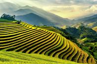 <p>This terraced land is built into hillsides and used to farm and cultivate semiaquatic rice. </p>