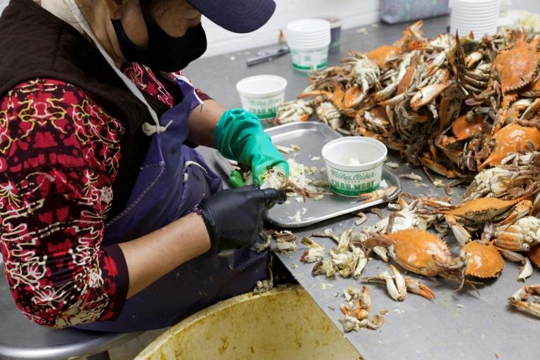 There are few takers for the tough, seasonal work of separating crab meat from their shells