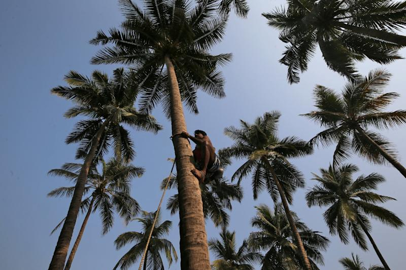 Scaling New Heights: Sri Lanka Minister Climbs Coconut Tree to Address Press Conference