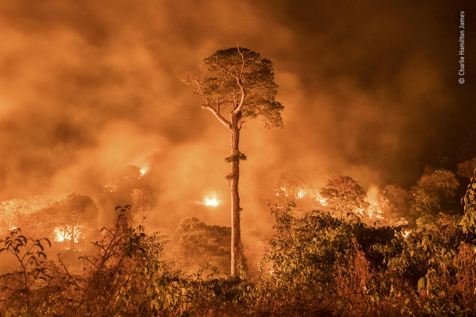 A fire burns out of control in Maranhão state, northeastern Brazil. A single tree remains standing –'a monument to human stupidity', says Charlie, who has been covering deforestation in the Amazon for the past decade.
