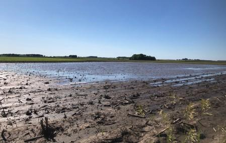 Puddles are seen in farm fields as heavy rains caused unprecedented delays in U.S. corn planting this spring, near Sheffield