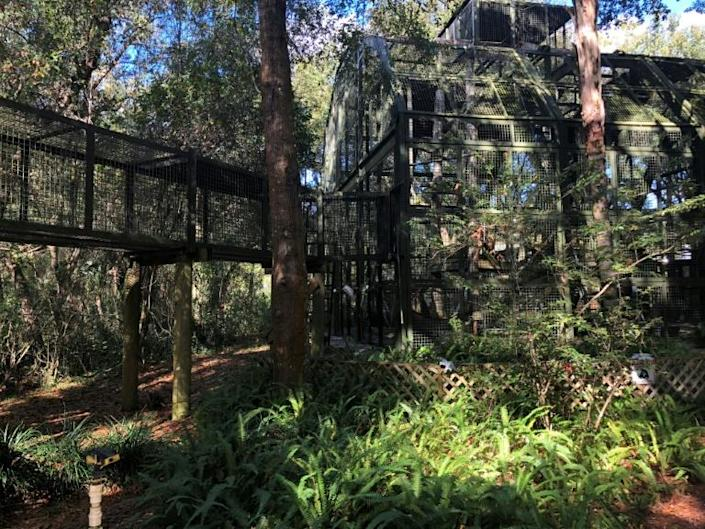 The Center For Great Apes is located on 40 hectares (98 acres) of wooded land near Wauchula, surrounded by central Florida's orange groves (AFP Photo/Leila MACOR)