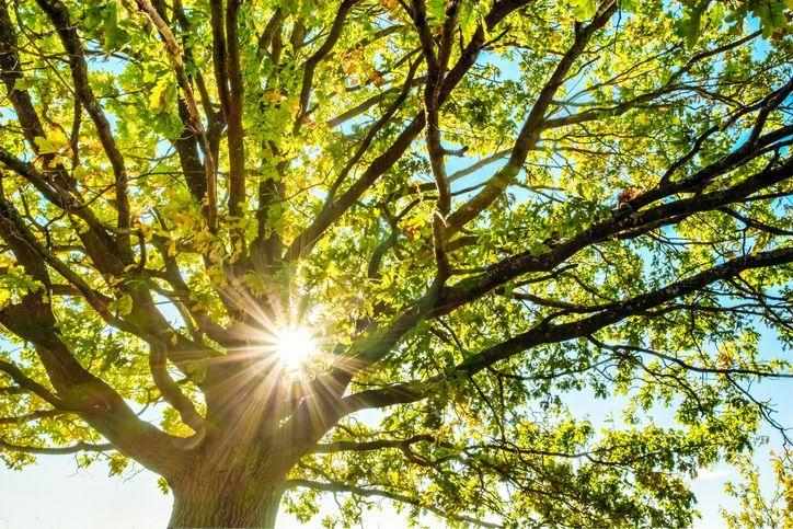 <p>There may be no better time to plant that oak tree you've been dreaming of than in October. Similar to fruit trees, planting young shade trees in the fall leaves plenty of time for them to establish roots before the heat of summer. It's important to carefully review which types of deciduous best thrive in your zone and how large the trees can grow. Next, you'll need to select a space that gives the tree plenty of room to grow without running into utility lines (or your house). Each tree variety has its own specific needs, so reach out to your local nursery for advice and guidance. </p>